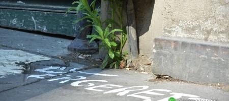 """SCOOP Le premier """"NAME CITY PLANT"""" de Paris 10 ème arrondissement"""