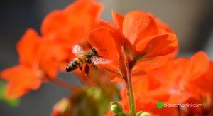 Bees & Compagnies
