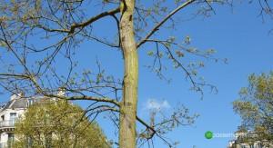 Scoop impasse Martini, les premières feuilles de la l'arbre du souvenir