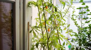 Un rideau de verdure